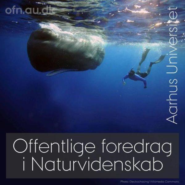 """Ny teknik afslører hvalernes skjulte liv - """"Livestreames"""""""